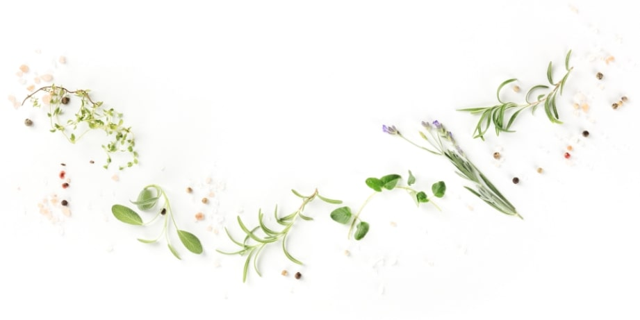 about us - fresh herbs